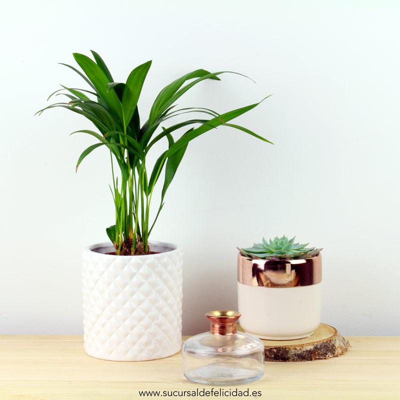 Tendencias decoración blancos y acabados metalizados - Maceta palmera