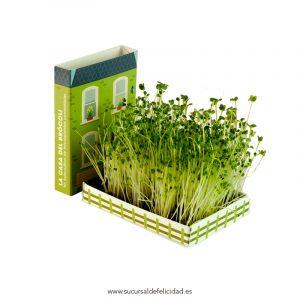 La Casa del Brócoli